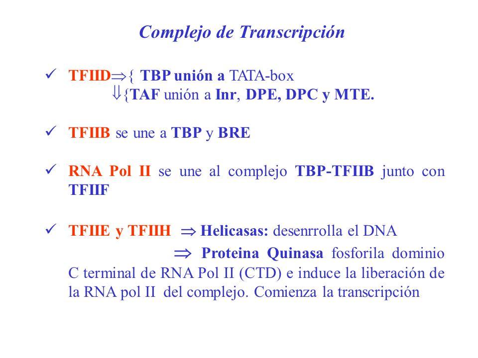 Complejo de Transcripción