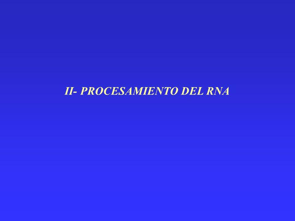 II- PROCESAMIENTO DEL RNA