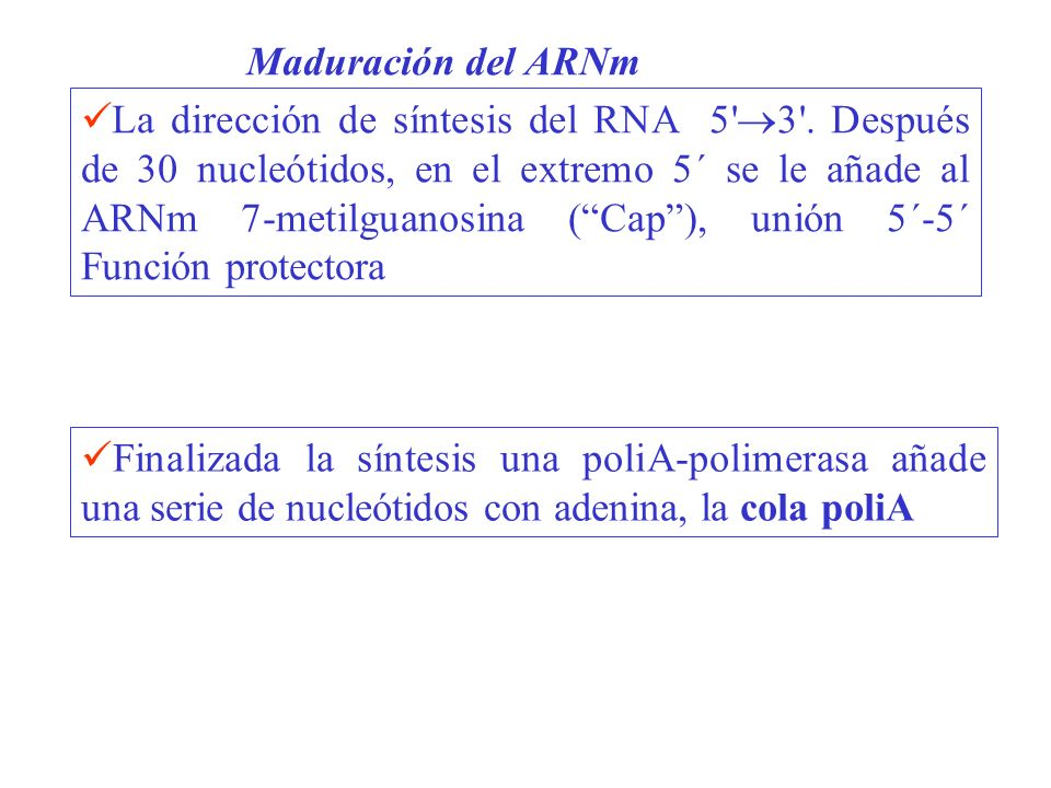Maduración del ARNm