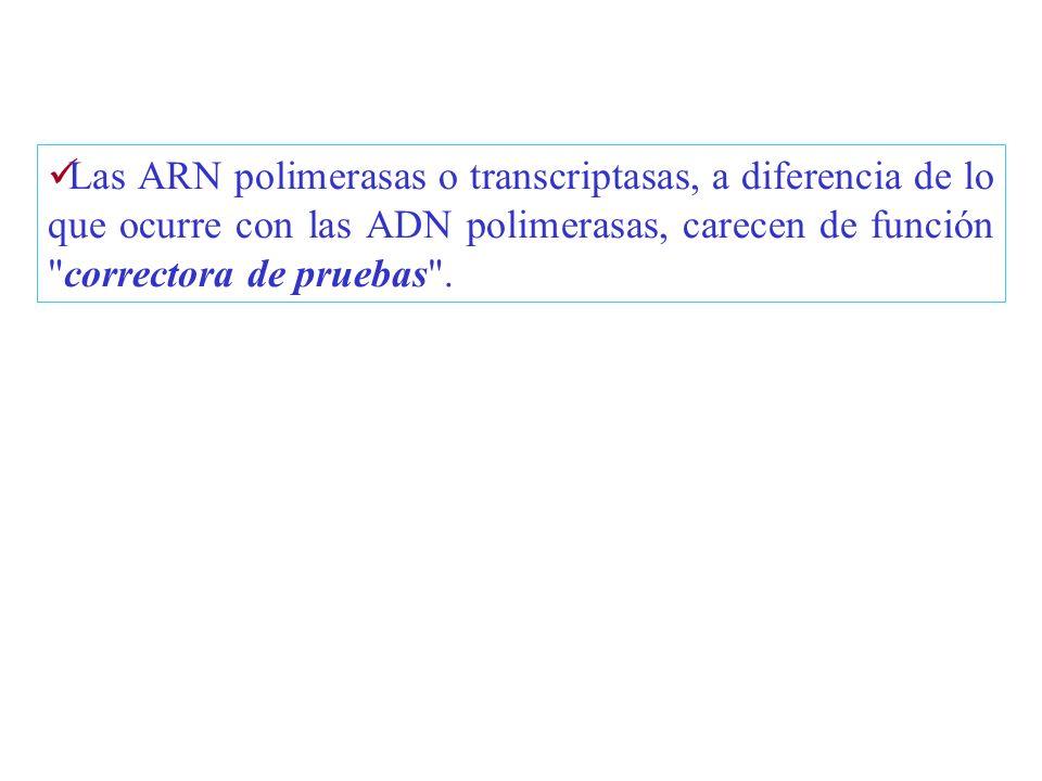 Las ARN polimerasas o transcriptasas, a diferencia de lo que ocurre con las ADN polimerasas, carecen de función correctora de pruebas .