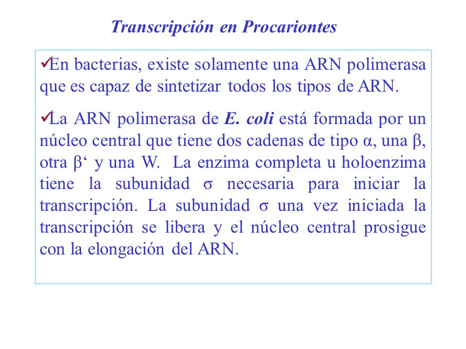 Transcripción en Procariontes