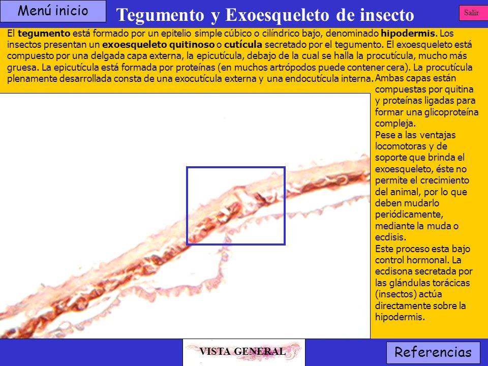 Tegumento y Exoesqueleto de insecto