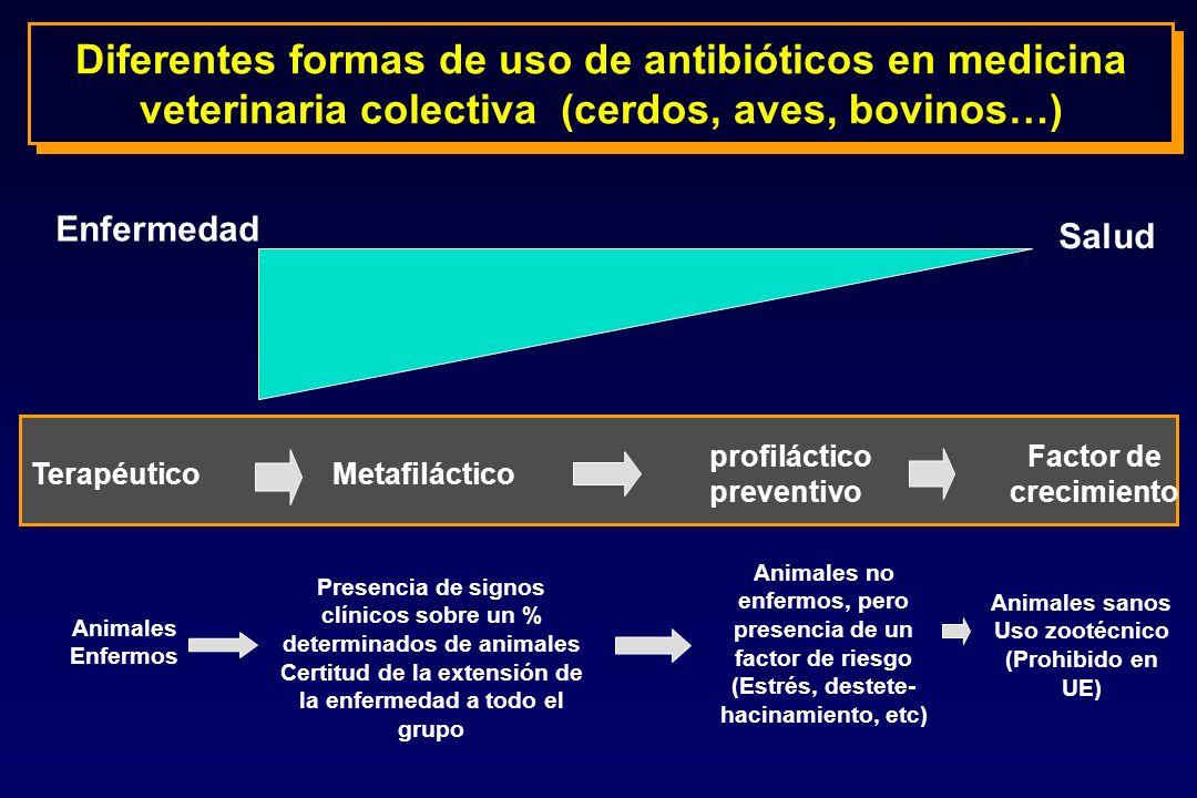 Diferentes formas de uso de antibióticos en medicina veterinaria colectiva (cerdos, aves, bovinos…)