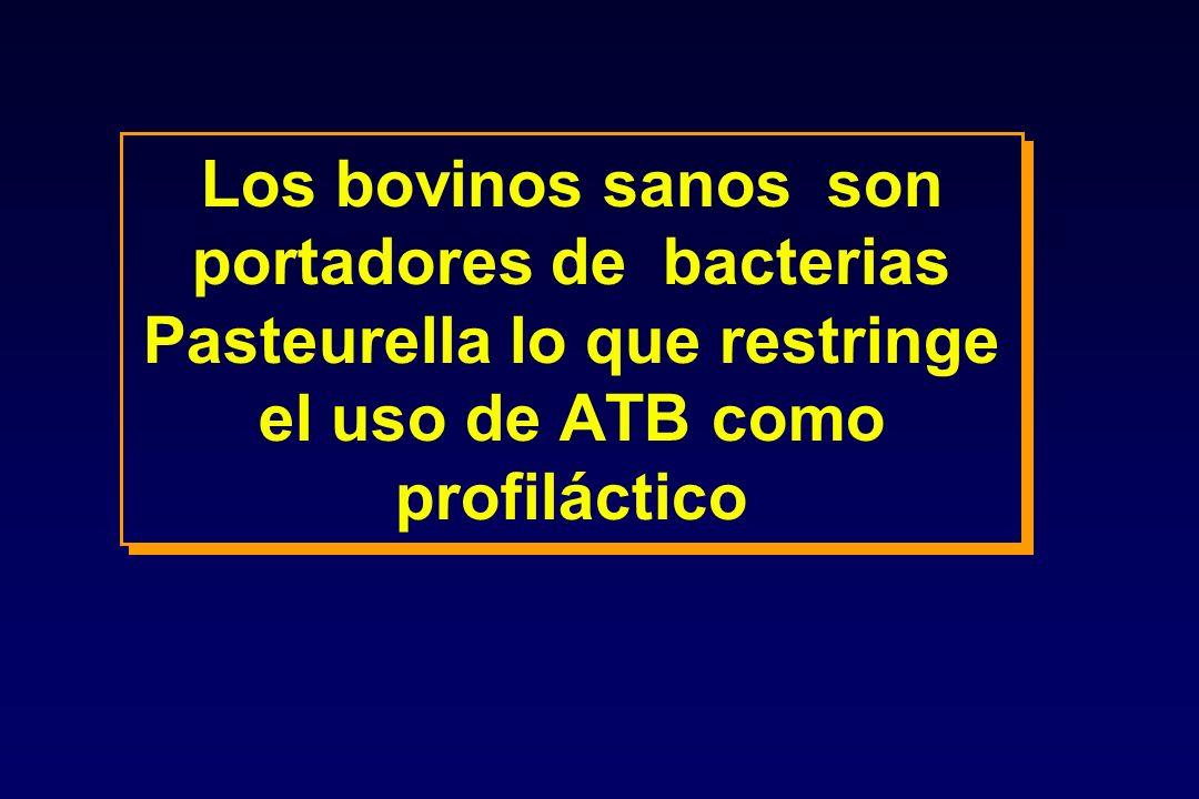 Los bovinos sanos son portadores de bacterias Pasteurella lo que restringe el uso de ATB como profiláctico