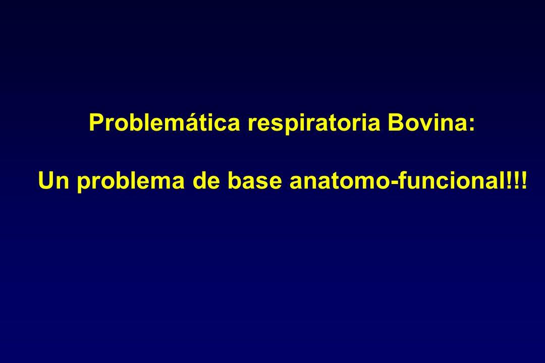 Problemática respiratoria Bovina: