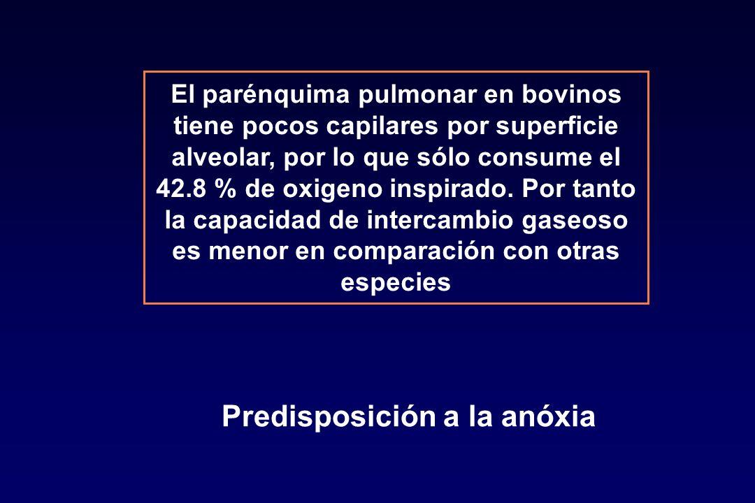 Predisposición a la anóxia
