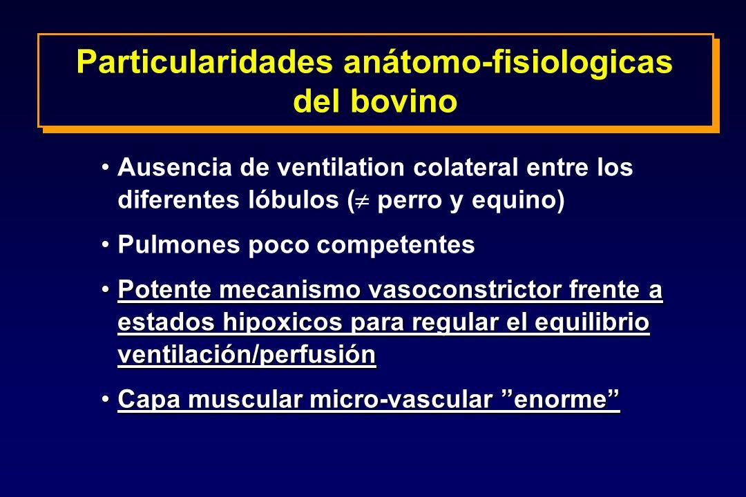Particularidades anátomo-fisiologicas del bovino