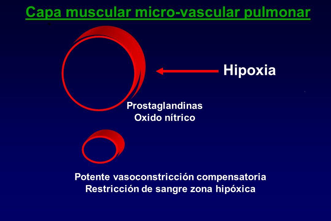 Capa muscular micro-vascular pulmonar
