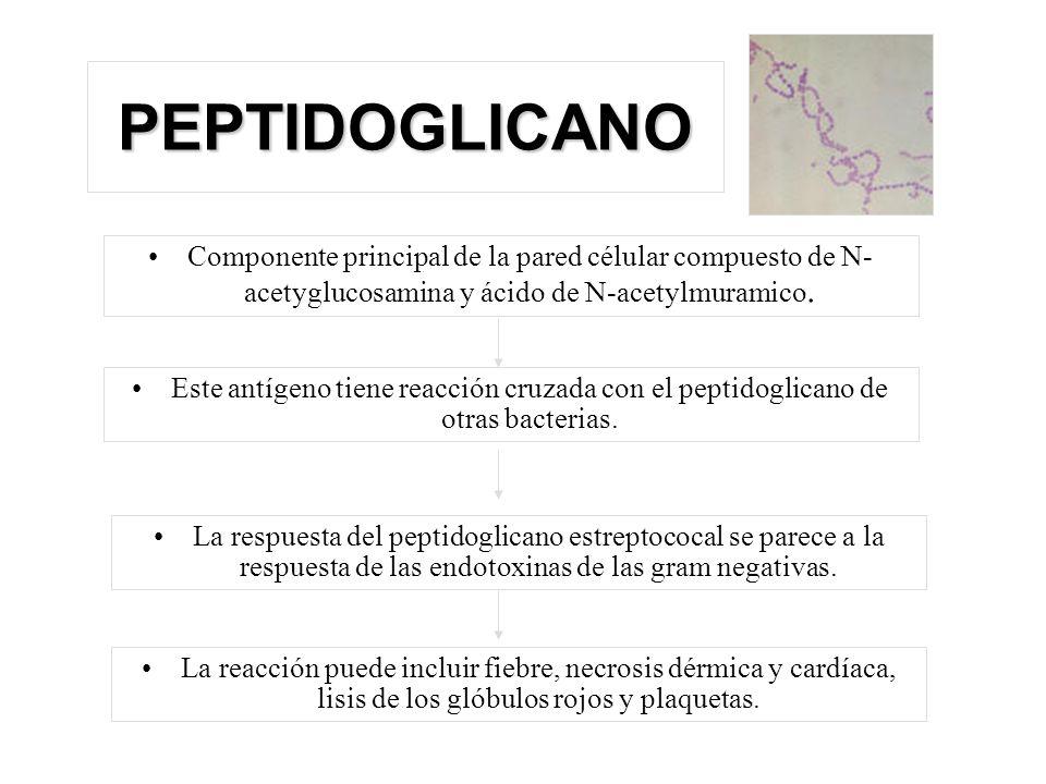 PEPTIDOGLICANO Componente principal de la pared célular compuesto de N-acetyglucosamina y ácido de N-acetylmuramico.