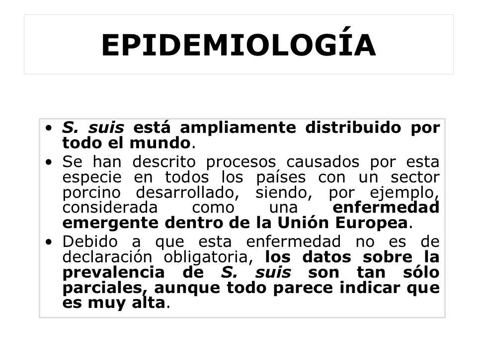 EPIDEMIOLOGÍA S. suis está ampliamente distribuido por todo el mundo.
