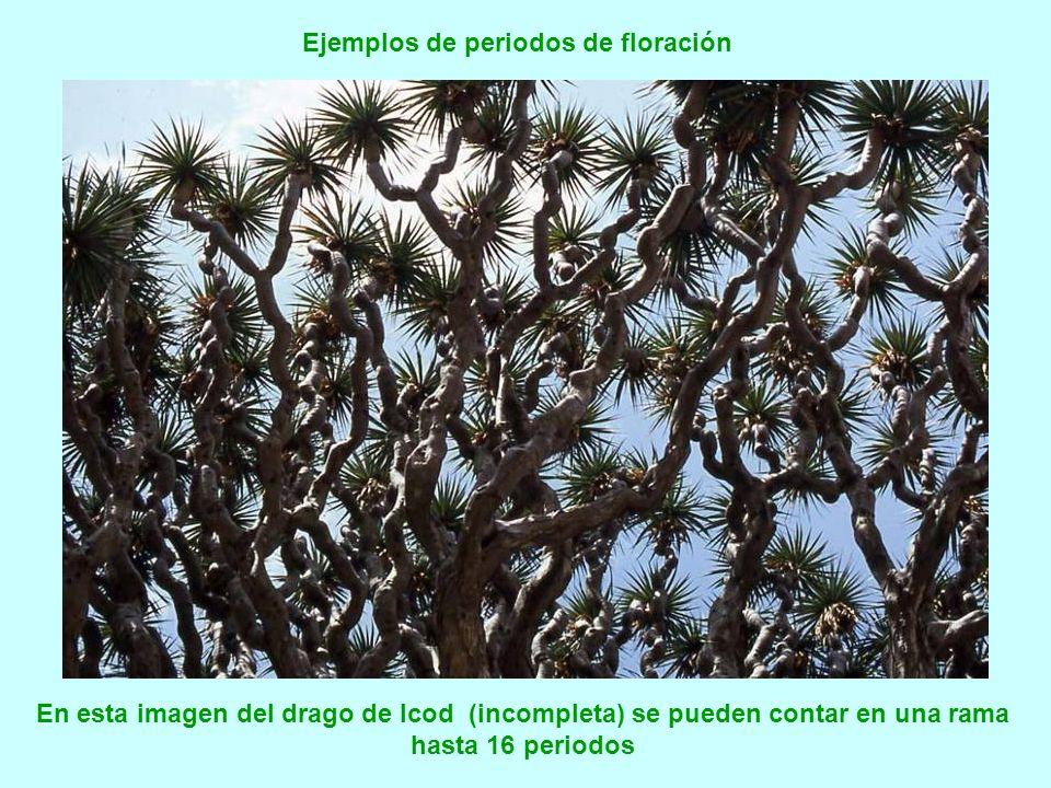 Ejemplos de periodos de floración