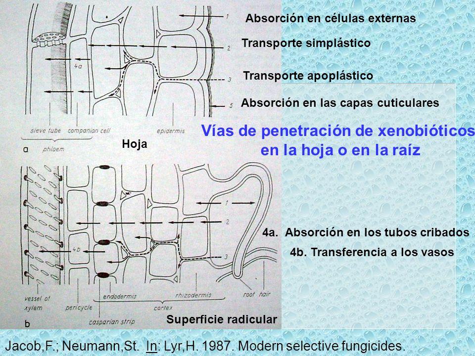 Vías de penetración de xenobióticos