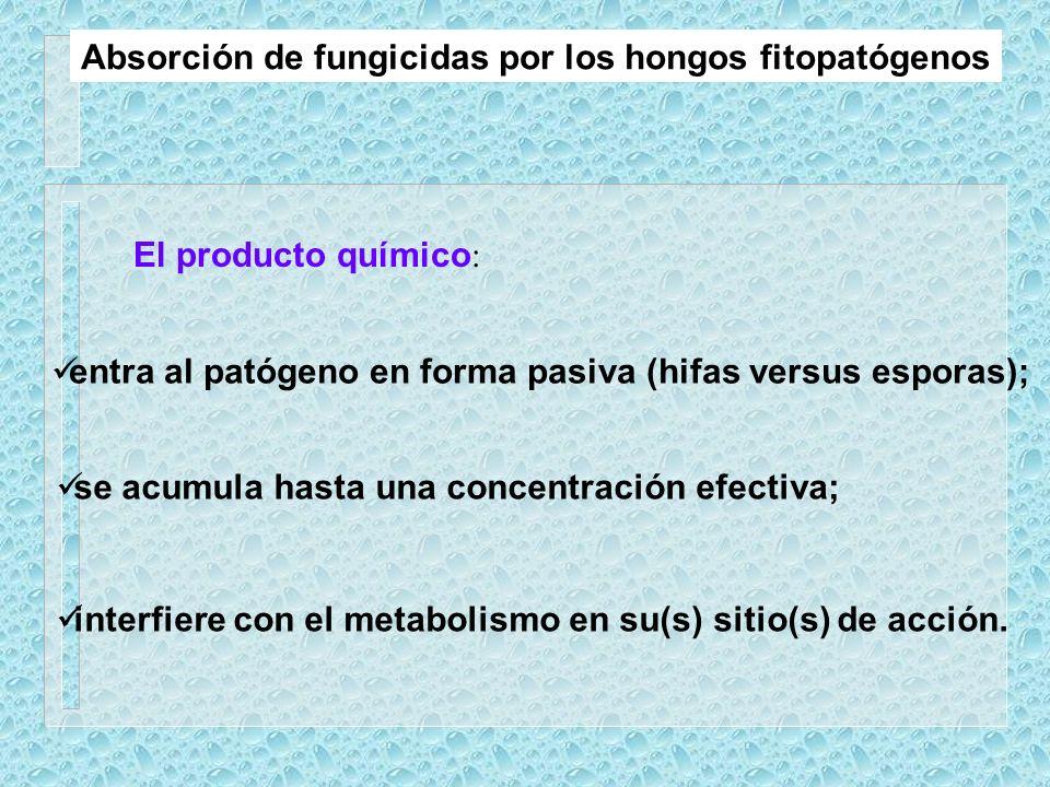 Absorción de fungicidas por los hongos fitopatógenos