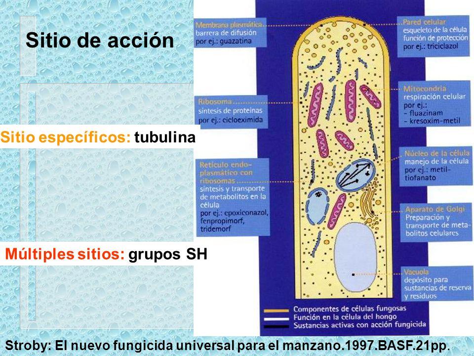 Sitio de acción Sitio específicos: tubulina