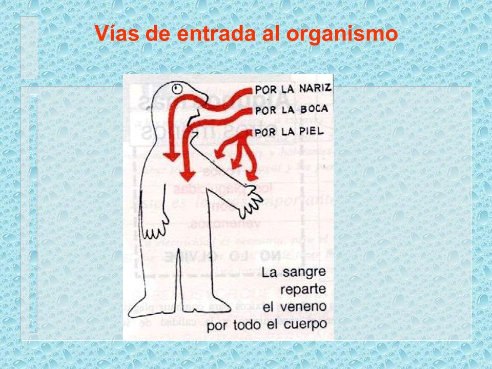 Vías de entrada al organismo