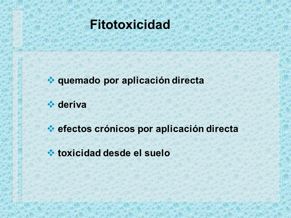 Fitotoxicidad quemado por aplicación directa deriva