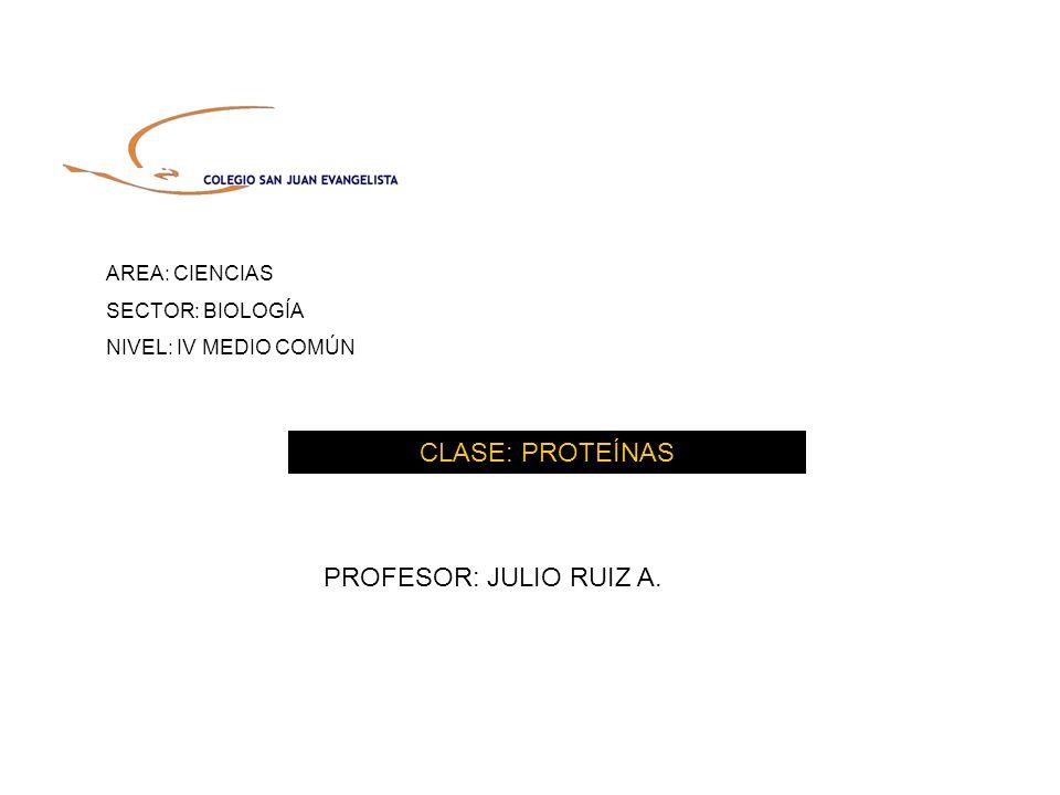 CLASE: PROTEÍNAS PROFESOR: JULIO RUIZ A. AREA: CIENCIAS