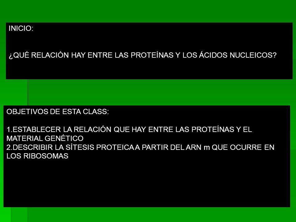 INICIO: ¿QUÉ RELACIÓN HAY ENTRE LAS PROTEÍNAS Y LOS ÁCIDOS NUCLEICOS OBJETIVOS DE ESTA CLASS: