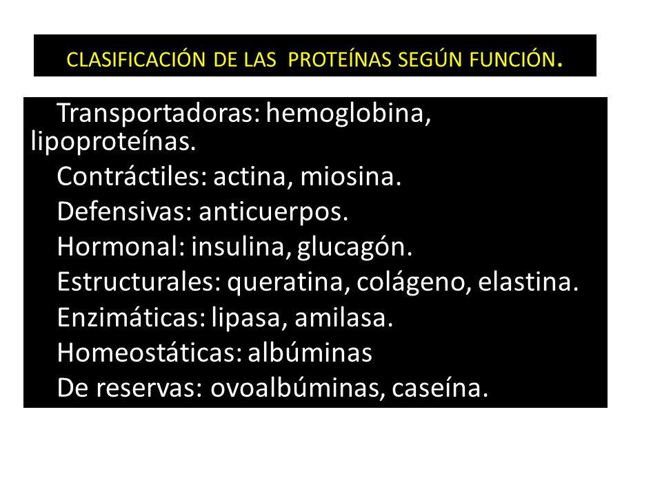 CLASIFICACIÓN DE LAS PROTEÍNAS SEGÚN FUNCIÓN.