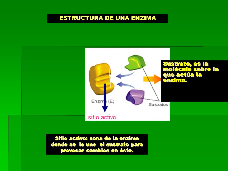 ESTRUCTURA DE UNA ENZIMA