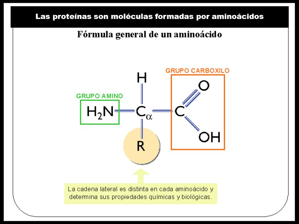 Las proteínas son moléculas formadas por aminoácidos