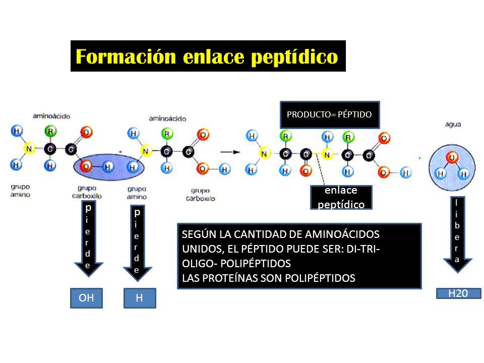 Formación enlace peptídico