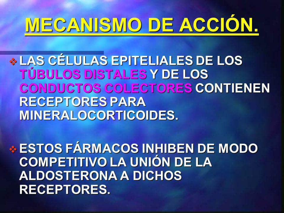 MECANISMO DE ACCIÓN. LAS CÉLULAS EPITELIALES DE LOS TÚBULOS DISTALES Y DE LOS CONDUCTOS COLECTORES CONTIENEN RECEPTORES PARA MINERALOCORTICOIDES.