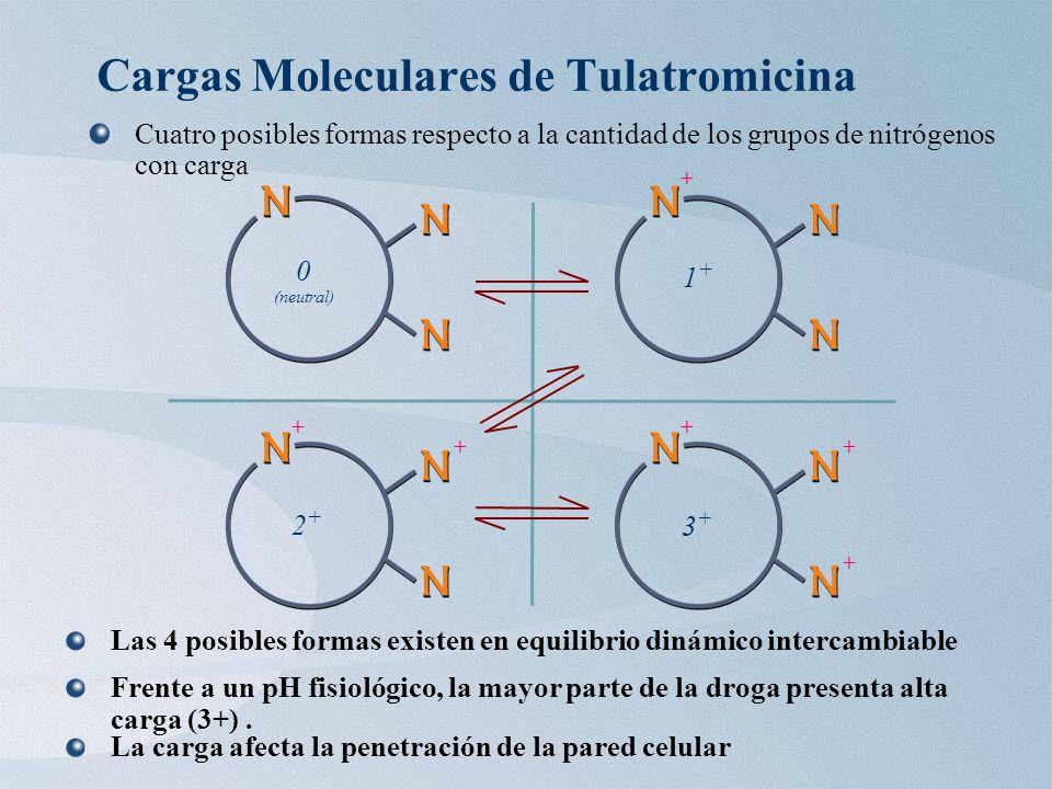 Cargas Moleculares de Tulatromicina