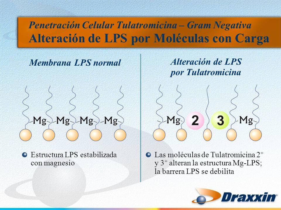 Penetración Celular Tulatromicina – Gram Negativa Alteración de LPS por Moléculas con Carga