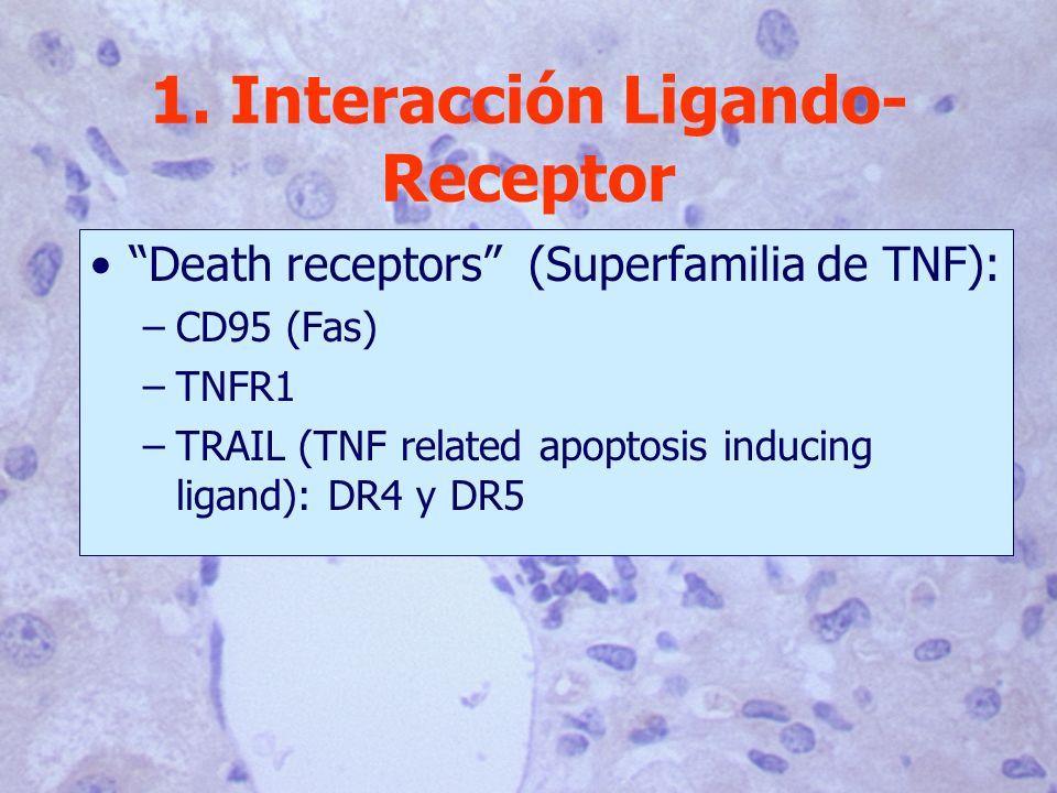 1. Interacción Ligando-Receptor