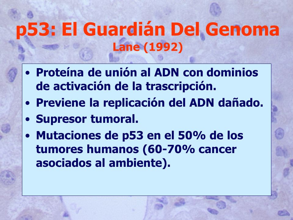 p53: El Guardián Del Genoma Lane (1992)