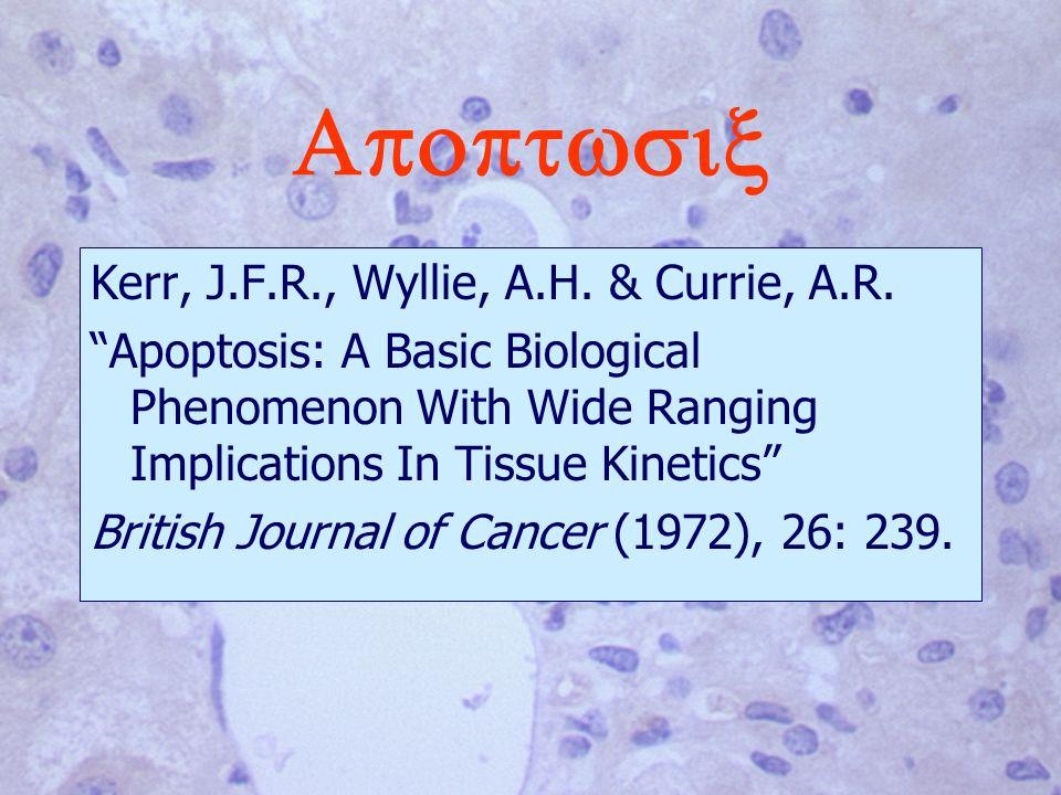 Apoptwsix Kerr, J.F.R., Wyllie, A.H. & Currie, A.R.