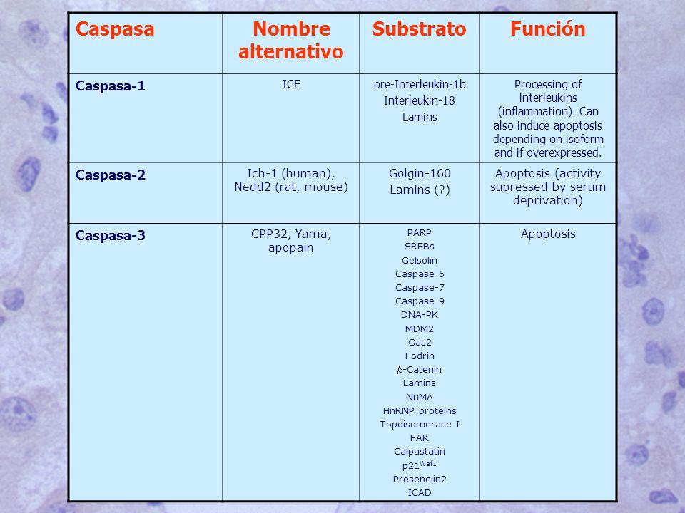 Nombre alternativo Substrato Función