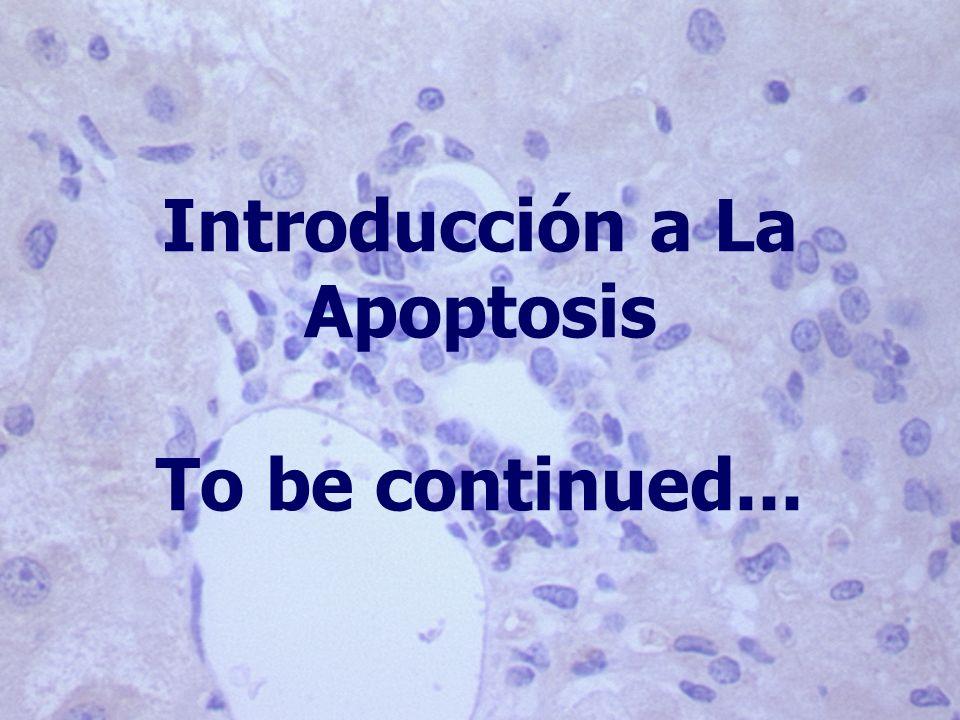 Introducción a La Apoptosis