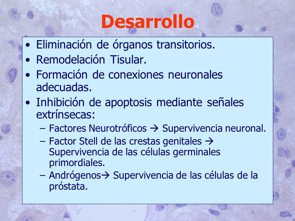 Desarrollo Eliminación de órganos transitorios. Remodelación Tisular.