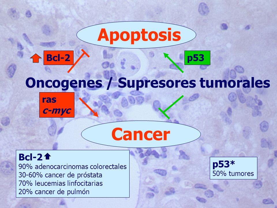 Oncogenes / Supresores tumorales