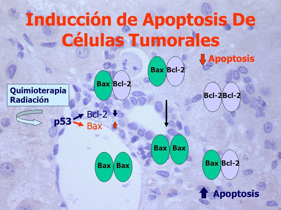 Inducción de Apoptosis De Células Tumorales