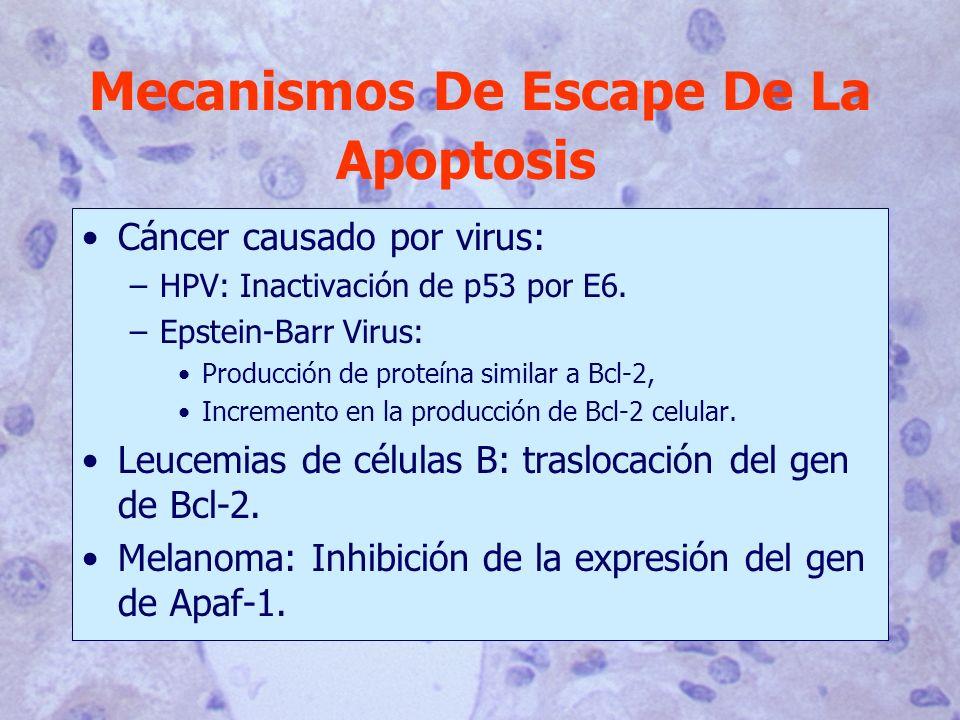 Mecanismos De Escape De La Apoptosis
