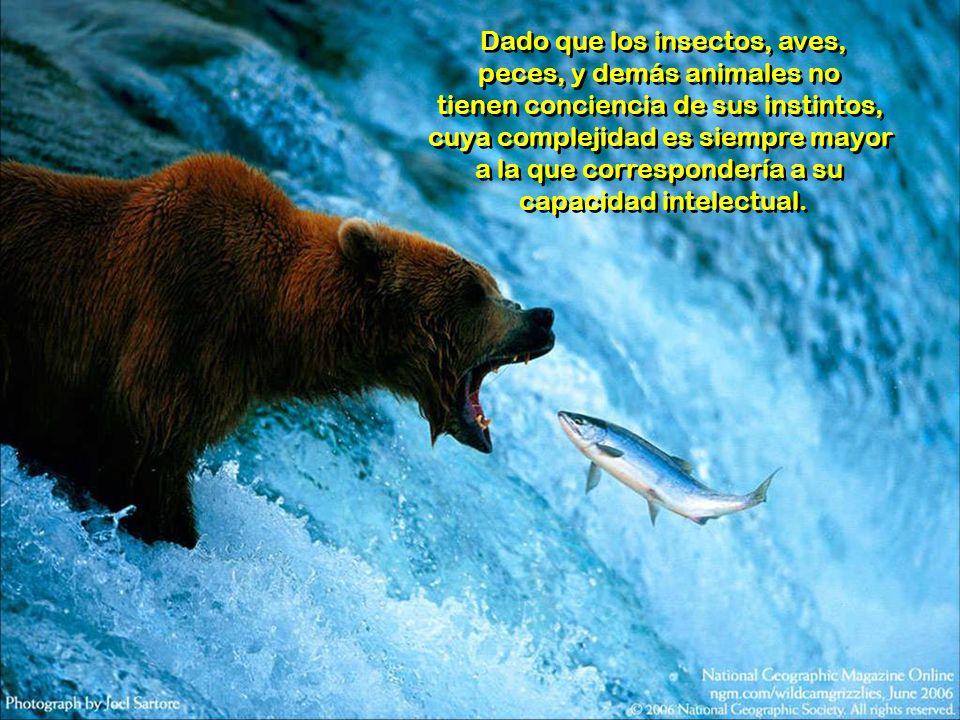 Dado que los insectos, aves, peces, y demás animales no tienen conciencia de sus instintos, cuya complejidad es siempre mayor a la que correspondería a su capacidad intelectual.