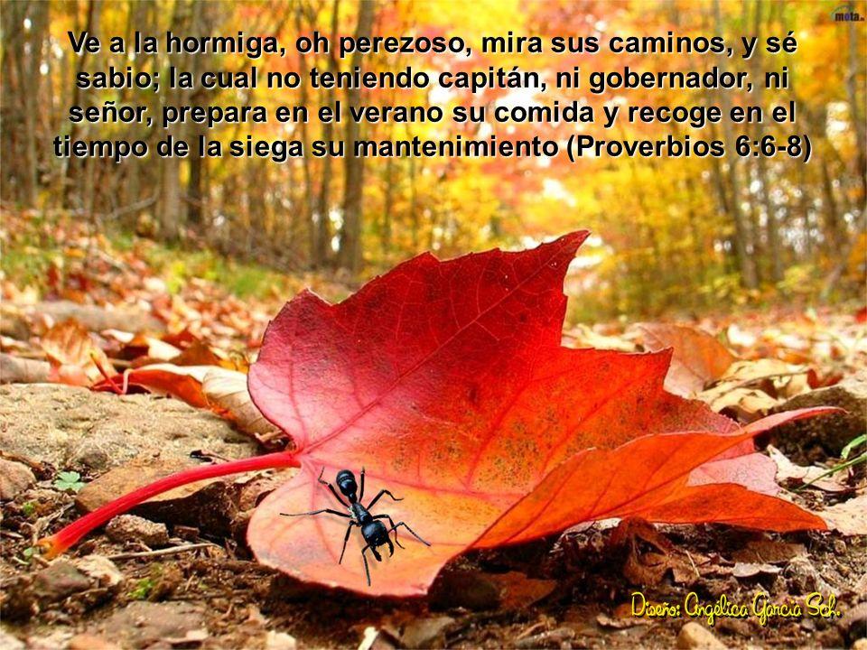 Ve a la hormiga, oh perezoso, mira sus caminos, y sé sabio; la cual no teniendo capitán, ni gobernador, ni señor, prepara en el verano su comida y recoge en el tiempo de la siega su mantenimiento (Proverbios 6:6-8)