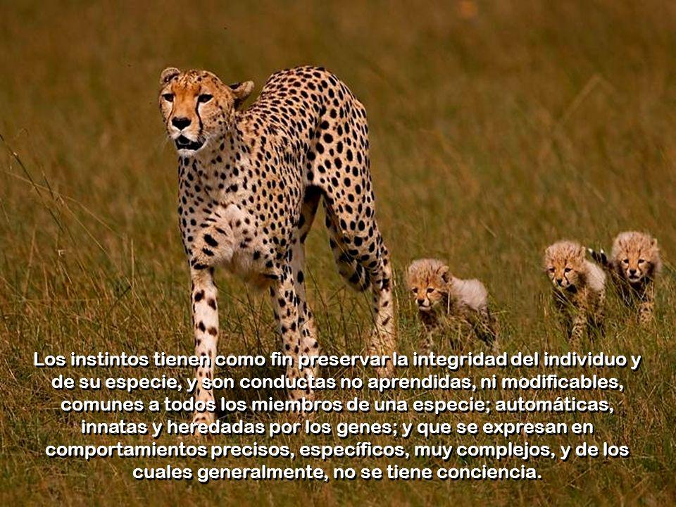 Los instintos tienen como fin preservar la integridad del individuo y de su especie, y son conductas no aprendidas, ni modificables, comunes a todos los miembros de una especie; automáticas, innatas y heredadas por los genes; y que se expresan en comportamientos precisos, específicos, muy complejos, y de los cuales generalmente, no se tiene conciencia.