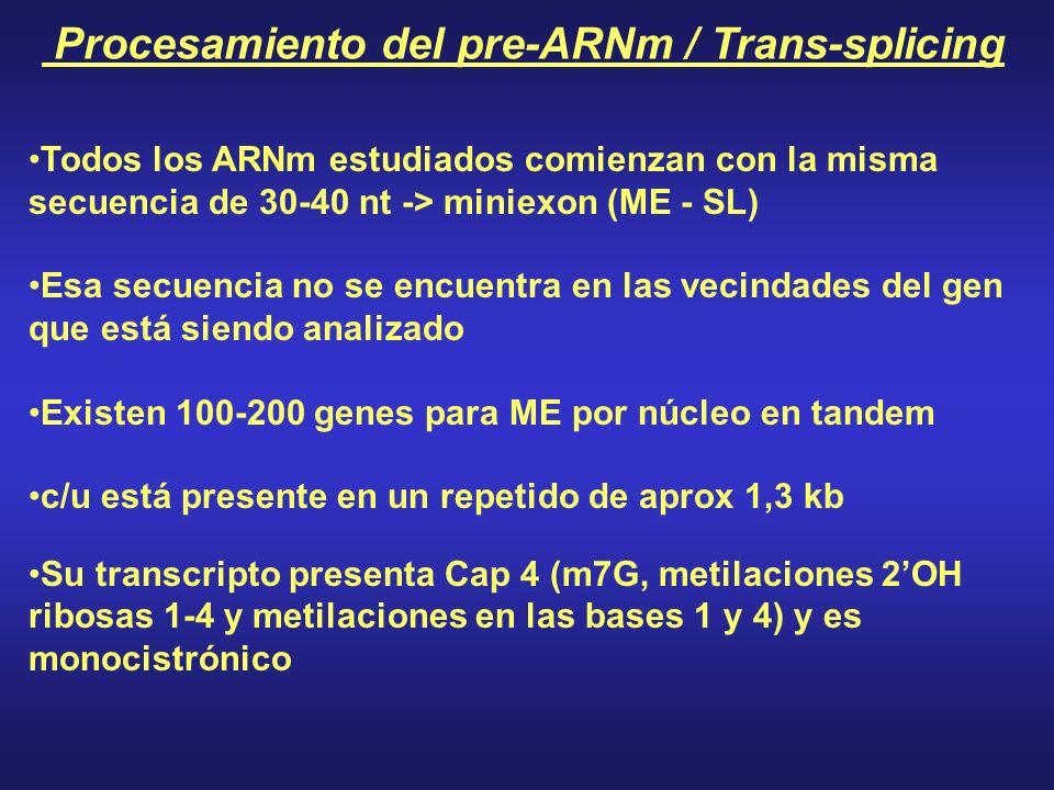 Procesamiento del pre-ARNm / Trans-splicing