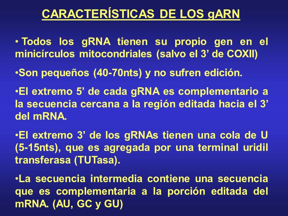 CARACTERÍSTICAS DE LOS gARN