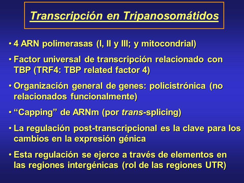 Transcripción en Tripanosomátidos