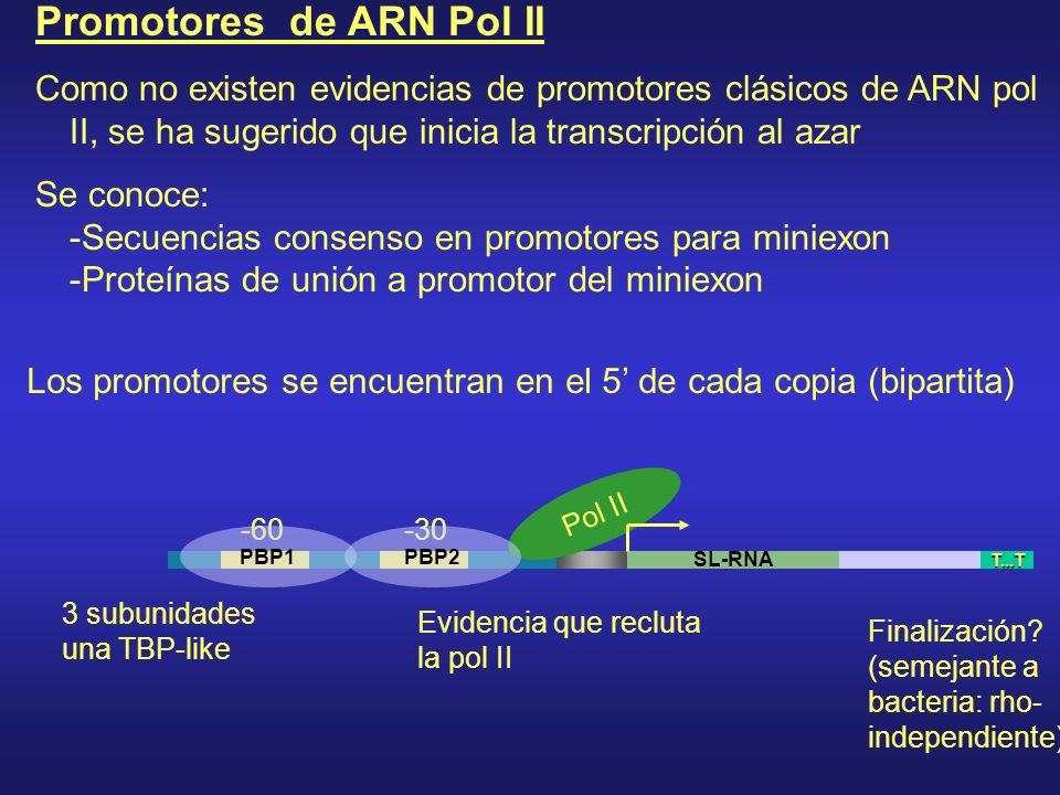 Promotores de ARN Pol II
