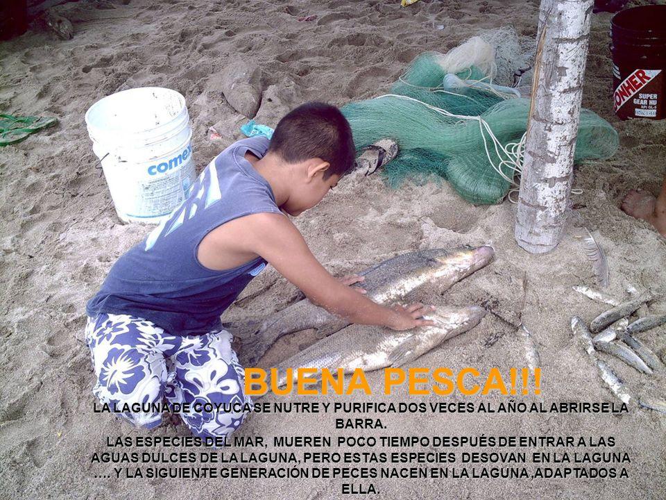 BUENA PESCA!!! LA LAGUNA DE COYUCA SE NUTRE Y PURIFICA DOS VECES AL AÑO AL ABRIRSE LA BARRA.