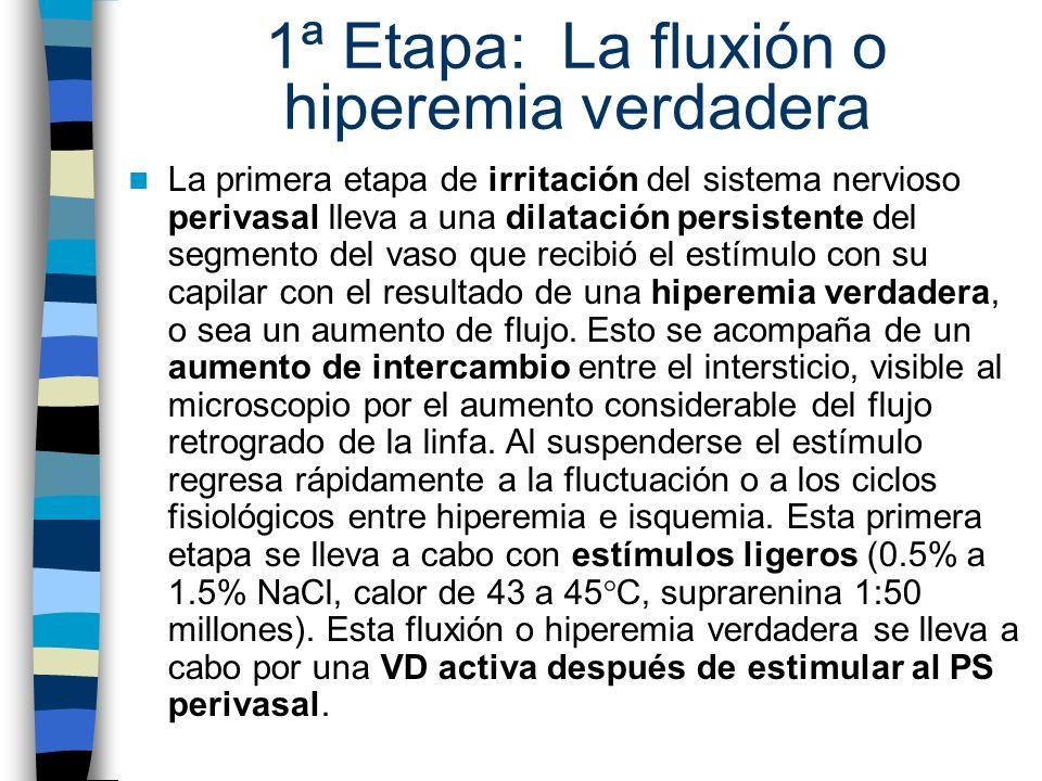 1ª Etapa: La fluxión o hiperemia verdadera
