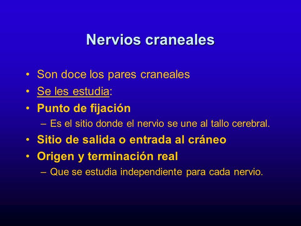Nervios craneales Son doce los pares craneales Se les estudia: