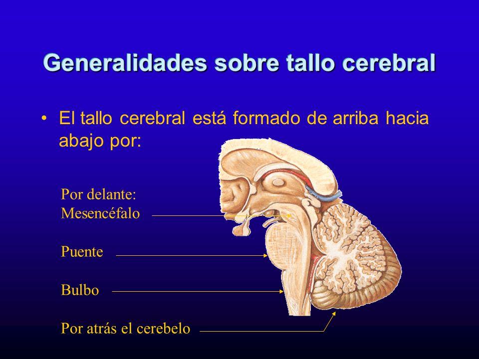 Generalidades sobre tallo cerebral