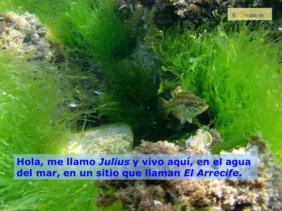 Hola, me llamo Julius y vivo aquí, en el agua